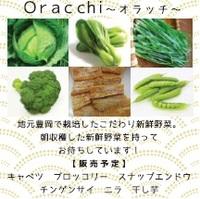 Oracchi.jpg